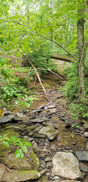 tennessee hiking trail